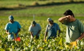 muncitori romani sezonieri agricultra