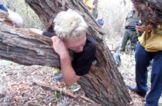 muncitor copac