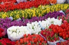 piata de flori lalele