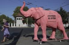elefant-roz