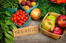 agricultura organiza ecologica