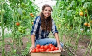 alimente rosii fermieri