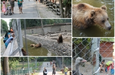 gradina zoologica timisoara
