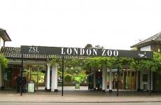 grădina zoologică din Londra