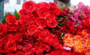 trandafiri flori