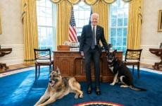 câini, Joe Biden