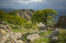 Parcul Naţional Munţii Măcinului
