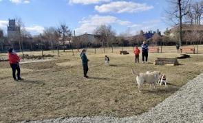 parc caine caini de companie