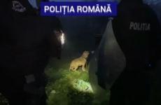 politie caini