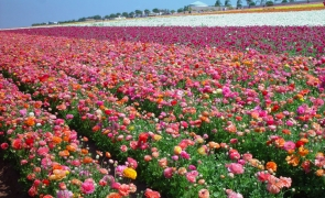 carlsbad california flori