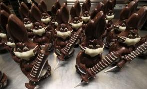 ciocolata belgia iepuri seringi covid