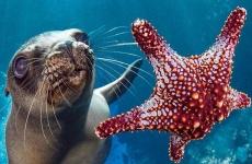 ocean foca