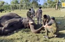 elefanti testati india
