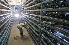 bitcoin farm minat