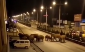 elefanti china