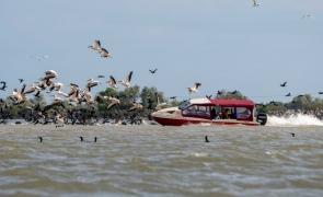 pelicani barca