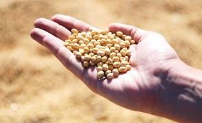 Alimentație și Agricultură palma