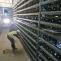 bitcoin farm minat criptomonede