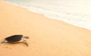testoasa nisip plaja
