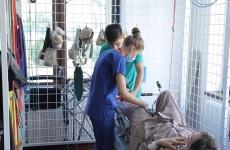 tratament oase fractura sold Spital Sfantul Sava