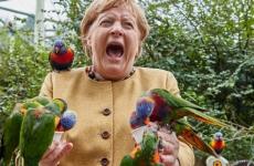 merkel papagali