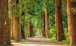 arbori copaci padure natura